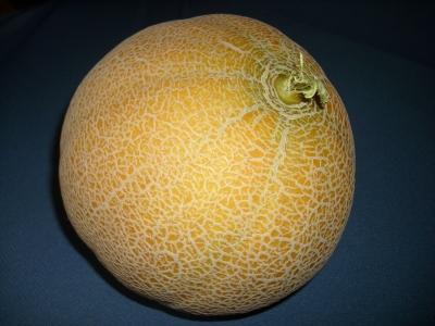 Melone_Retato